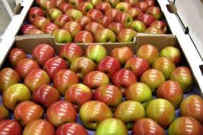 El ministro Buryaile recibirá a fruticultores de Río Negro y Neuquén
