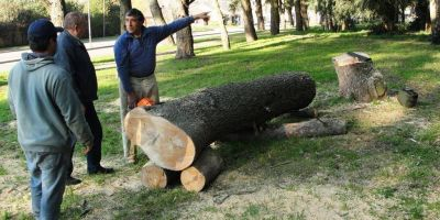 Defensa Civil realizó un relevamiento de árboles en el Cerro El Triunfo