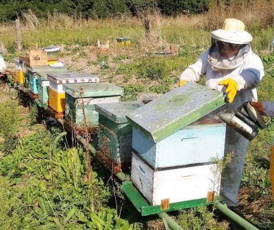 MIRAMAR: El valor de la miel sigue estando muy por debajo de lo esperado