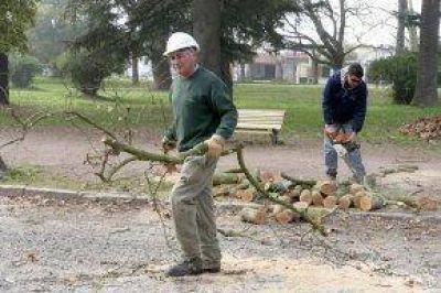 Realizan una poda correctiva para mejorar la seguridad del Parque