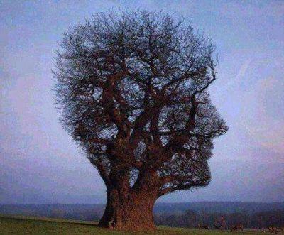 Más tiempo para tener más propuestas y más árboles