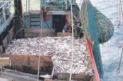 Primer semestre negativo para el sector pesquero