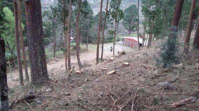 Un plan de remediación por la tala de árboles
