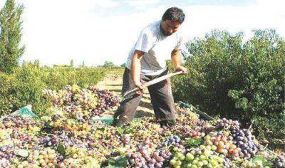 La vitivinicultura genera 35 veces m�s empleo que la soja