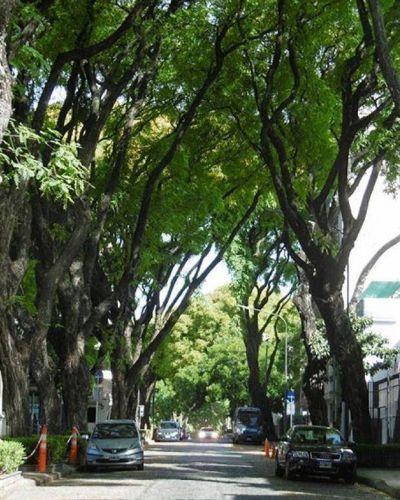 Polémica por la poda invernal de árboles en los barrios porteños