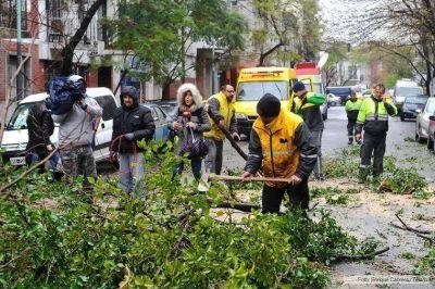 Caída de árboles, postes y carteles por el fuerte viento en la Ciudad de Buenos Aires