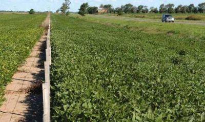 �Por qu� en Baradero se dejaron de alquilar las banquinas para cultivo?