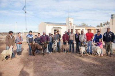 Desarrollo productivo: entregaron caprinos a productores del Departamento Belgrano