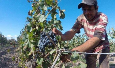 Cuestionaron las medidas de ayuda a los vitivinicultores