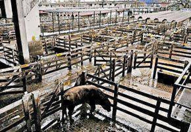 El paro del campo se sintió fuerte:no se vendió ganado ni granos