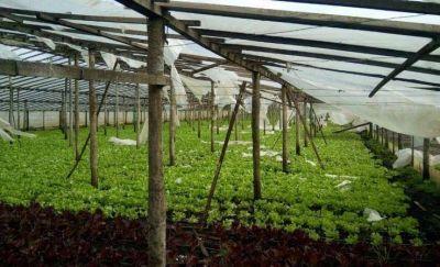 """Productores frutihortícolas: """"En 40 años nunca hemos visto tanto daño"""""""