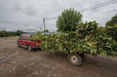 Subieron las exportaciones de Salta, pero sin industrializar