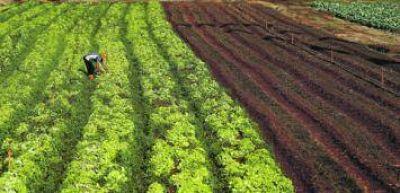 """Campesinos aseguran que el presupuesto 2017 """"es una sentencia de muerte"""" para la agricultura familiar"""