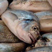 El mi�rcoles, como protesta, regalar�n pescado en el Puerto
