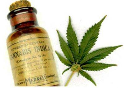 Exitoso seminario de Cannabis medicinal del Norte