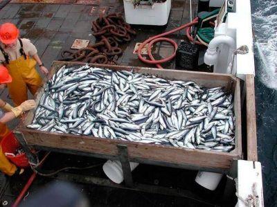 Gremios de la pesca buscan una reunión con Vidal