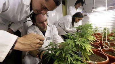 Luz verde para proyecto entrerriano de uso de cannabis medicinal