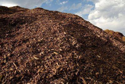 Aseguran que Misiones tiene m�s hect�reas forestadas para producir energ�a renovable por biomasa