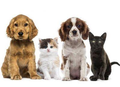 Comenzó el operativo gratuito de sanidad animal