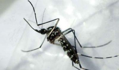 Pedido de informe por la campa�a contra el dengue en Salta