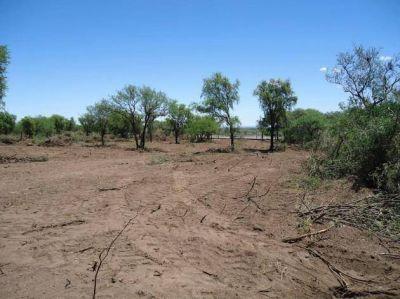 Bosque nativo: el Gobierno multa los desmontes no autorizados