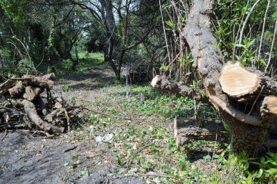 Multarán a balneario por la tala ilegal de árboles
