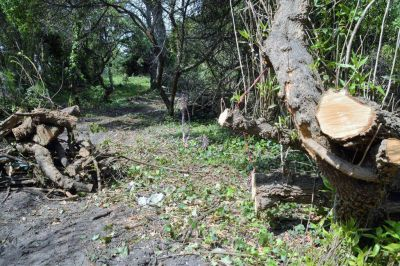 Multar�n a balneario por la tala ilegal de �rboles