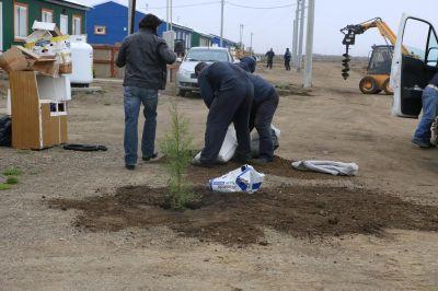 Realizan trabajos de forestación en el barrio del Bicentenario