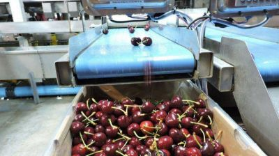 Brasil endurece las reglas para importar carozos