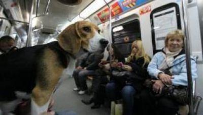 El 72% de los porteños aceptó que las mascotas viajen en subte