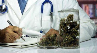 Cambiemos aceptaría el uso de marihuana como medicina, pero quiere controlar el cultivo
