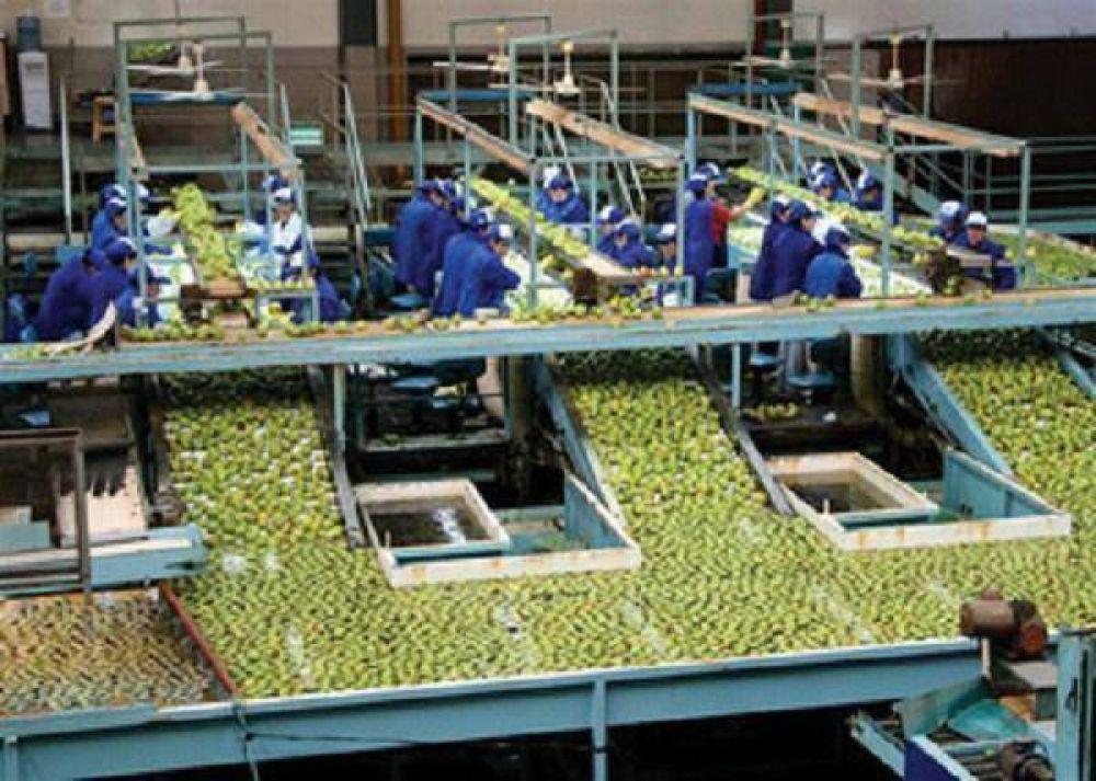 Exprofrut cerró dos plantas y despide a 260 empleados. Hay recortes y más desempleo.