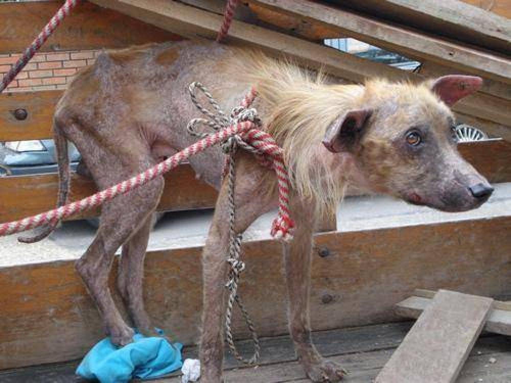 La Rioja adhirió a la Ley Nacional contra el maltrato animal