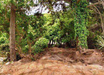 Paralizaron obras de poda ilegal en un balneario de la zona sur