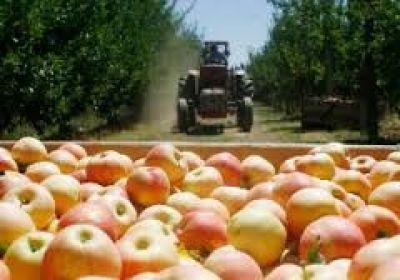 La crisis frutícola amenaza con dejar una ola de despidos