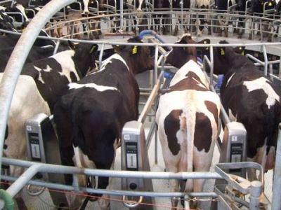 Con distinta suerte, Nación y Provincia buscan hacer frente a la crisis del sector lechero