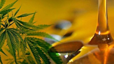 Neuquén ya discute si le da el OK al cannabis medicinal