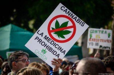 Buscan incorporar el cannabis medicinal al cat�logo bonaerense de tratamientos alternativos