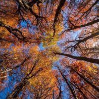 Neuqu�n recibir� fondos para la conservaci�n y manejo sostenible de los bosques nativos