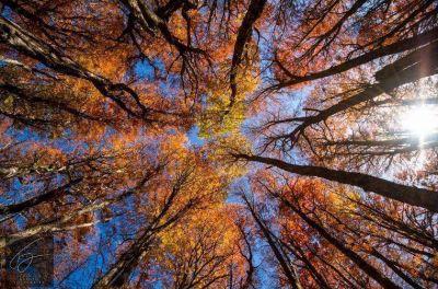 Neuquén recibirá fondos para la conservación y manejo sostenible de los bosques nativos