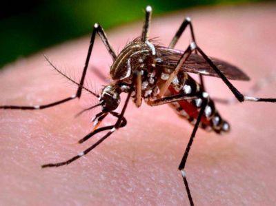 Comienza el per�odo de lluvias y crece el alerta por el dengue