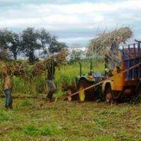 San Javier: obreros del Ingenio Azucarero reclaman deudas impagas del IFAI, �el paro no se levanta�