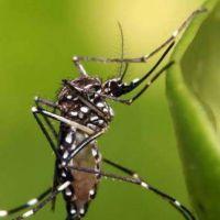 La Unse se suma a la campa�a nacional contra los mosquitos del Ministerio de Salud nacional