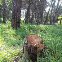 Elevan una denuncia penal ambiental por la deforestaci�n de 600m� en la reserva del sur