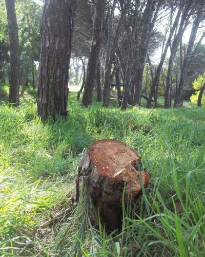 Elevan una denuncia penal ambiental por la deforestación de 600m² en la reserva del sur