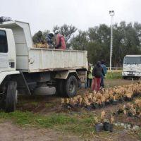 Cuenca del Morro: 5 mil cortaderas iniciaron su viaje forestal