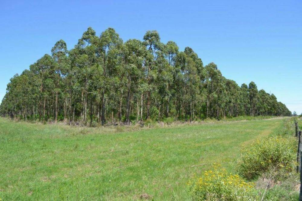 Funcionarios lanzarán seminario de inversiones forestoindustriales