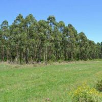 Funcionarios lanzar�n seminario de inversiones forestoindustriales