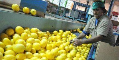 Estados Unidos volverá a comprar limones tucumanos