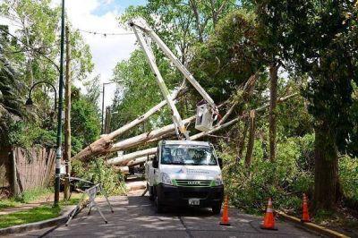El Municipio removió un árbol caído sobre las vías del Tren de la Costa